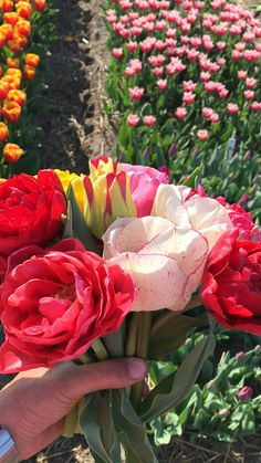October and November are the best months to plant your tulip bulbs. We have a nice selection of tulips and daffodils on our website. They come in a nice box including our 64 page Magazine and a set of postcards. Checkout our range now! Bulb Flowers, Tulips Flowers, Daffodils, Purple Flowers, Beautiful Flowers Garden, Beautiful Roses, Planting Tulips, Spring Flowering Bulbs, Tulip Bulbs