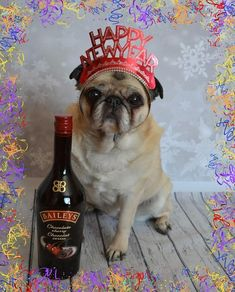 Bailey Puggins cheering in the New Year! #pug #pugs #dog #NewYear #party #celebrate #pets #costume #cheers