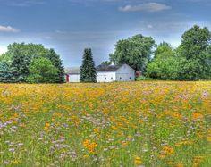 """Summer in the Midwest"" Print ~ my favorite Midwest prairie field!"
