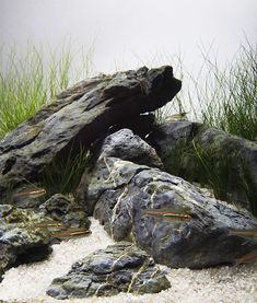 Rock Garden Design, Landscaping With Rocks, Planted Aquarium, Bouldering, Pencil Drawings, Art Reference, Farmer, Art Projects, Explore