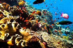 Sail&Diving Indonésie