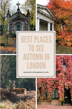 Autumn in London - Best Places to see Autumn Colours in London Best Places In London, Things To Do In London, Travel Ideas, Travel Inspiration, Adventures Abroad, Autumn Colours, Worldwide Travel, European Countries, Europe Travel Tips