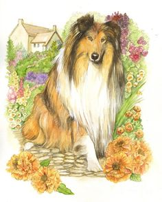 Collie Dog Painting by Morgan Fitzsimons - Collie Dog Fine Art Prints and Posters for Sale