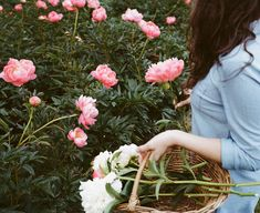 peony reference Peonies And Hydrangeas, Peonies Garden, Garden Web, Lawn And Garden, Garden Plants, Home And Garden, Growing Peonies, Blossom Garden, Farm Gardens