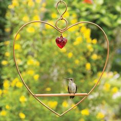 Duncraft.com: Tweet Heart Birdie Swing Copper Colored - Attract hummingbirds with a sweet, heart-shaped hummingbird swing where they can perch, preen and rest while remaining on the lookout for predators. Made from pretty copper colored metal with a wooden dowel perch, where hummingbirds sit as still as can be, so you can enjoy the colors in their teeny tiny feathers. Includes a hanging hook for hanging from a tree branch or hanging bracket. 9-1/4 x 1/4 x 9-1/2 inches. Garden Bird Feeders, Humming Bird Feeders, Humming Birds, Hummingbird Swing, Hummingbird House, How To Attract Hummingbirds, Bird Perch, Backyard Birds, Small Birds