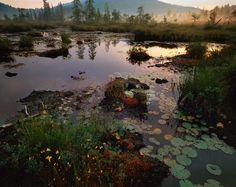 Weller Pond Inlet