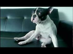 The Dog Food Ad That Will Make You Misty-Eyed.