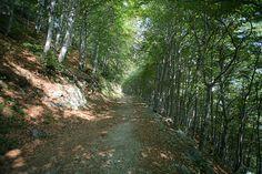 Il #Bosco del #Sorriso - Un cammino per ritrovare tra gli alberi, avvolti dai profumi e dai suoni della natura, la serenità e l'armonia interiore. Nell'#Oasi #Zegna, in #Piemonte. www.oasizegna.com