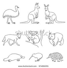 Undemanding Advices Australian Animals Drawing 2019 Tier Doodles, Animal Templates, Animal Doodles, Quilting Templates, Australian Animals, Hand Illustration, Learn To Draw, Animal Drawings, Clip Art