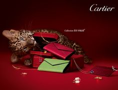 Cartier - Collection les must