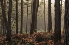 Bourne Wood near Farnham, Surrey - Google Search