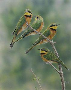 Australian Bird Artist Peta Boyce with these Little Bee-eaters