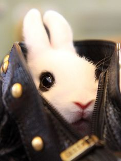 Leather handbag bunny is the best accessory