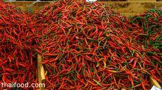 พริกชี้ฟ้า-cayenne-pepper Cayenne Peppers, Chili, Stuffed Peppers, Chile, Stuffed Pepper, Chilis, Stuffed Sweet Peppers