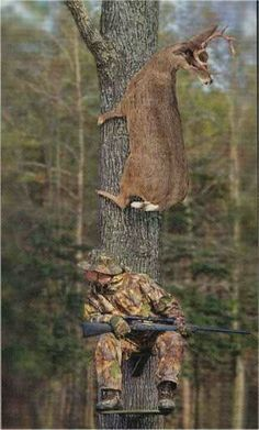 Deer over man in tree stand