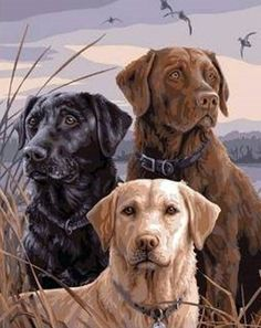 E-onelife Diy Oil Painting, Paint By Number Kits For Children, African Lion Dog Diy Digital Oil Painting Without. Russian Dogs, Lion Dog, Paint By Number Kits, 5d Diamond Painting, Black Labrador, Labrador Dogs, Black Labs, Dog Paintings, Outdoor Dog