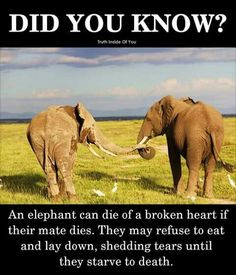 MR. TRUMP. The gestation period alone is 2 years. This species will never recover from the damage you are allowing greedy America to inflict on this species. Stop killing elephants!!!!!