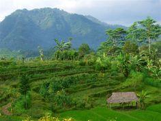 local terraced fields