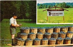 ALTUS AR - WIEDERKEHR WINELAND wine cellars arkansas postcard