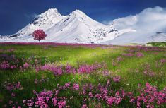 Challenge yourself with this Autumn Fields. Alps Mountains jigsaw puzzle for free. Flower Landscape, Landscape Photos, Landscape Photography, Photography Tips, Digital Photography, Landscape Design, Gothic Landscape, Nature Photography, Better Photography