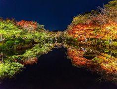 夜になるとライトアップされた東寺を見ることができます。壮大な建物と、自然が織りなすその景色はまさに絶景