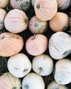 Gorgeous massed pastel pumpkins for beautiful fall inspiration and autumn splendor with a quiet whisper. Fall Inspiration, Autumn Aesthetic, Happy Fall Y'all, Fall Season, Fall Halloween, Autumn Leaves, Fall Decor, Harvest, Fall Winter