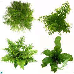 Ferns Best Indoor Plants, Air Pollution, Tropical Plants, Ferns, Garden Plants, Gardening, Garten, Fern, Lawn And Garden