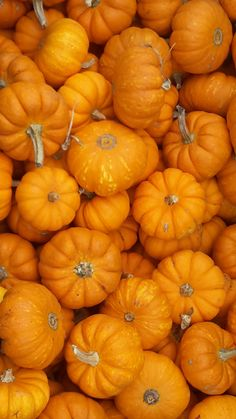 acorns-and-tea:  acorns-and-tea: BABY PUMPKINS ARE MY FAVOURITE!!!