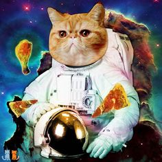#throw forward Saturday when #sirpumpkin made it to Mars with Room Musk and started a jerk chicken stand. Ya Mon!  #exoticshorthair #cat #cute #flatface #meow #mreggs #catlover #exoticsofinstagram #smushface #buzzfeedcats