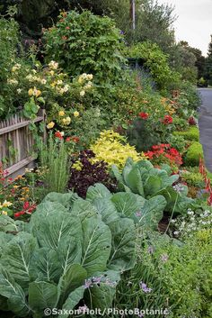 Streetside ornamental vegetable garden border; Rosalind Creasy's northern California organic ornamental edible landscaping small space front yard garden