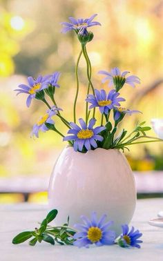 Beautiful Flowers Pictures, Flower Pictures, Best Background Images, Bloom Where You Are Planted, Hanging Flowers, Morning Greeting, Good Morning Images, Flowers Nature, Ikebana