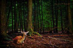 The Deer Hunter by Ronaldo F Cabuhat, via Flickr