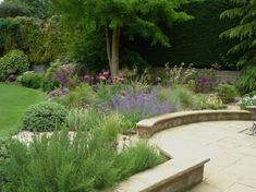 Gravel Garden in St. IppolytsHitchin, Hertfordshire - Amanda Broughton Garden Design