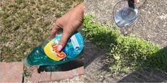 Садовник показывает простой трюк, который поможет избавиться от сорняков - дешево и эффективно