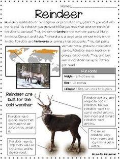 Reindeer Reading Passage ::FREEBIE