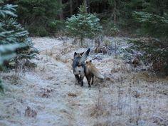 Fotostrecke: Entzückende Tierfreundschaft | Sniffer und Tinni | news.de