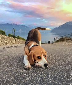 Everything About The  Beagle Pup And Kids #beaglemania #beaglemom