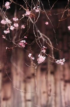 Spring by Makoto Isa (Brown + Pink Pink Brown, Green And Brown, Color Rosa, Pink Color, Dusty Pink, Dusty Rose, Scenery Photography, World Of Color, Color Themes