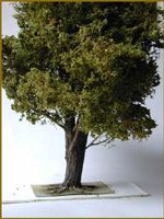 TUTO Confectionner un arbre miniature
