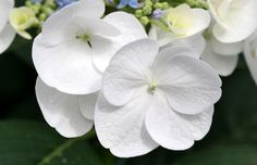 Výsledek obrázku pro white flowers