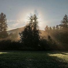 Rise and shine  Picture by: @sebringl.  #sun #sunday #sunrays #tree #nature #autumn #colours #season #bluesky #halo #explore #adventure #gooutside #outsidelife #travel #traveltogermany #germany #schwangau by traveltogermany