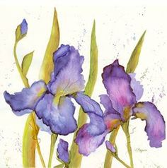 Purple Majesty watercolor art of purple Iris on 300 lb Arches by artist Joan Maguire. Original and Giclee prints available,