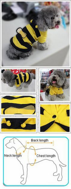 Honey-Bee dog clothes     I sometimes look into the face of my dog Stan and see a wistful sadness and existential angst, when all he is actually doing is slowly scanning the ceiling for flies.