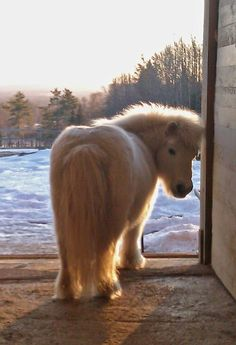 Look at that warm winter fuzz! #Horse #Equestrian