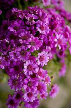 Beautiful purple flowers / - - Your Local 14 day Weather FREE > www. No Ads or Apps or Hidden Costs Exotic Flowers, Amazing Flowers, My Flower, Colorful Flowers, Purple Flowers, Beautiful Flowers, Autumn Flowers, Purple Daisy, Magenta