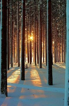 The sun shinning through the woods on a wintery day.
