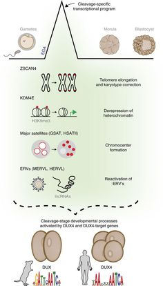 BioTechniques - Transcription's Origin Story