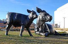 Dan Ostermiller. Scottish Angus Cow and Calf. 2001. bronze. Denver, Colorado.