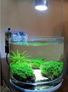 Planted Tank - Community - Google+