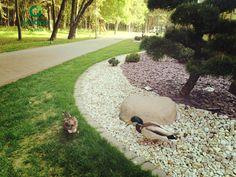 Kai aplanko draugai. #antys #palanga #ducks Our Life, Ducks, Kai